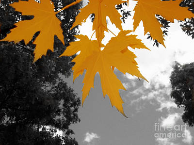 Photograph - Orange Maple Leaves by Mary Mikawoz
