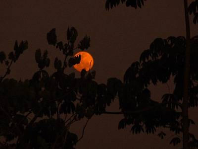 Photograph - Orange Moon by Xafira Mendonsa