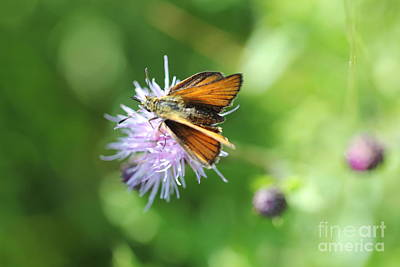 Photograph - Orange Moth by Donna L Munro