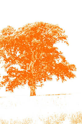 Orange Oak Art Print by Alan Look