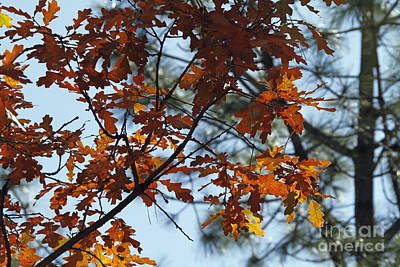 Photograph - Orange Oak by Shawn Naranjo