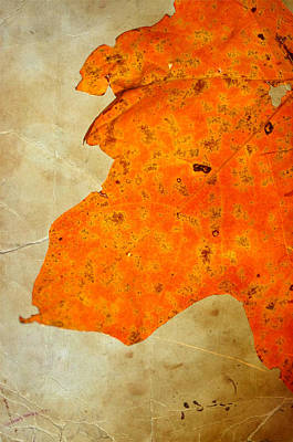 Photograph - Orange Pleasure by Emily Stauring