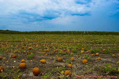 Orange Pumpkins And Blue Skies Art Print