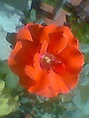 Photograph - Orange Rose by Archana Saxena