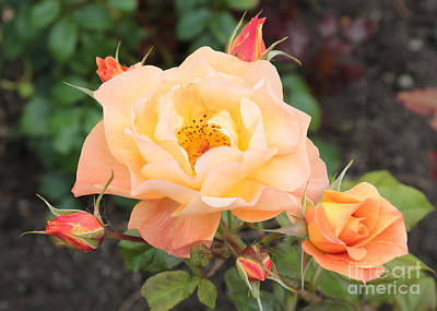 Science Collection - Orange Roses in Oslo by Carol Groenen