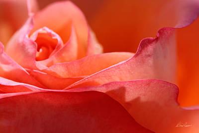 Photograph - Orange Sensation by Diana Haronis