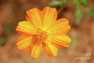 Orange Surbert Art Print