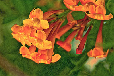 Photograph - Orange Trumpet Vine by James Steele