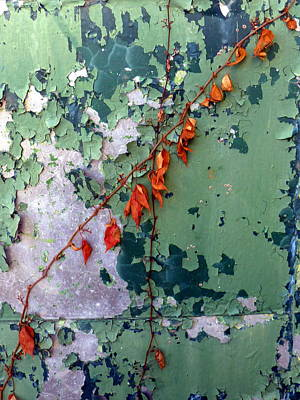 Photograph - Orange Vine On Peeling Green Door by Carla Parris