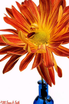 Susan Smith Photograph - Orange You Happy by Susan Smith