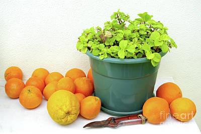 Oranges And Vase Print by Carlos Caetano