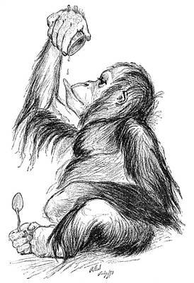 Orangutan, 19th Century Print by