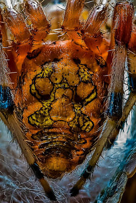 Photograph - Orb Spider I by Gene Hilton