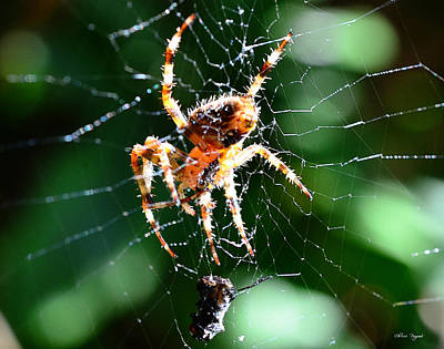 Photograph - Orb Weaver And Lunch by Chriss Pagani