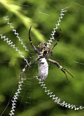 Print featuring the photograph Orb Weaver by Joy Watson