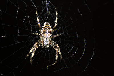 Photograph - Orb Web Spider by Chris Day