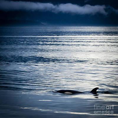 Orca Surfacing Art Print by Darcy Michaelchuk