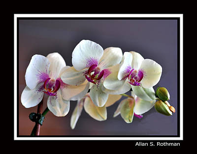 Photograph - Orchard 7 by Allan Rothman