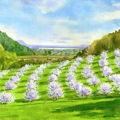 Painting - Orchard Blossems by Phyllis Martino