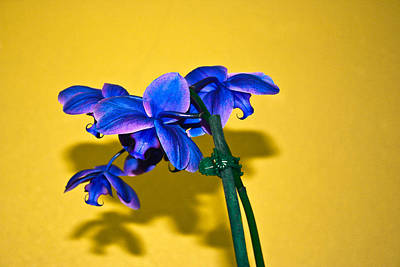 Photograph - Orchid #1 by David Alexander