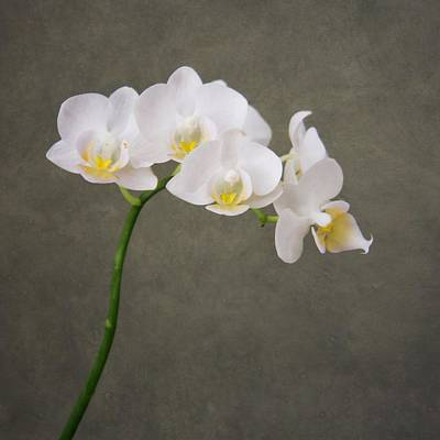 Photograph - Orchid 1 by Mary Hershberger