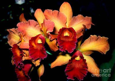 Photograph - Orchid 1 by Terry Elniski