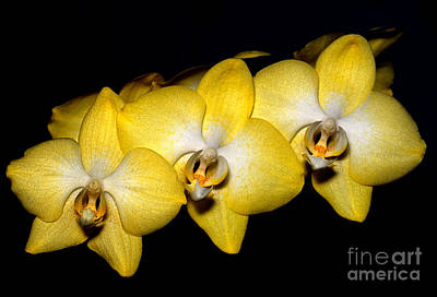 Photograph - Orchid 19 by Terry Elniski