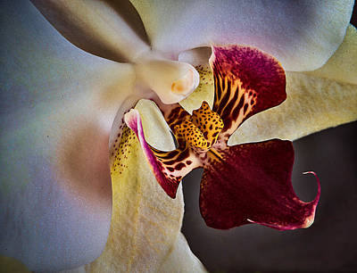 Photograph - Orchid 2 by Vladimir Kholostykh