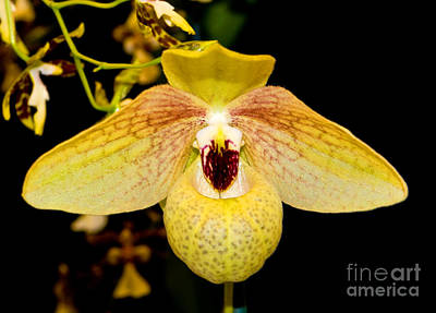 Photograph - Orchid 23 by Terry Elniski