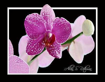 Photograph - Orchid 3 by Allan Rothman