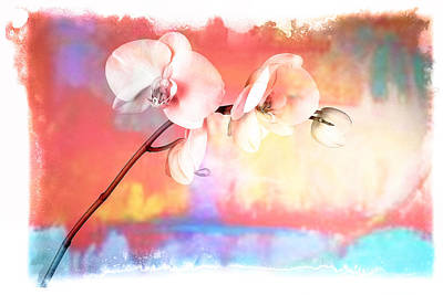 Orchid 3 Art Print by Mauro Celotti