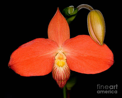 Photograph - Orchid 30 by Terry Elniski