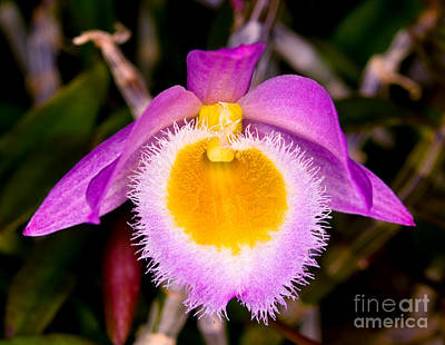 Photograph - Orchid 31 by Terry Elniski