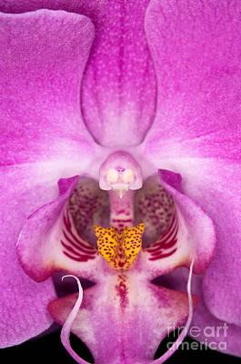 Winter Animals - Orchid 38 by Terry Elniski