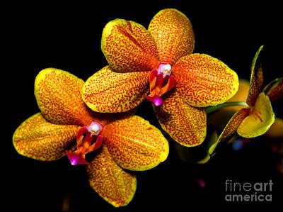 Orchid 58 Art Print