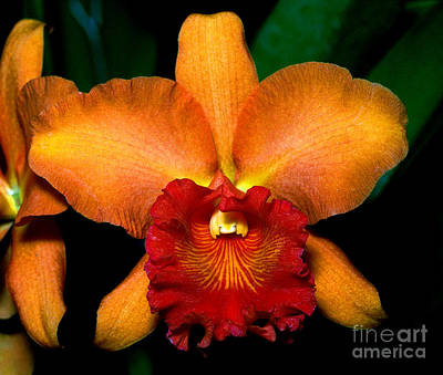 Lady Bug - Orchid 6 by Terry Elniski