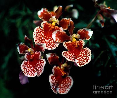 Orchid 61 Art Print