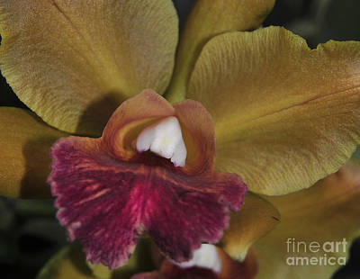 Blc Photograph - Orchid 85 by Terri Winkler