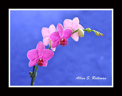 Photograph - Orchid 9 by Allan Rothman