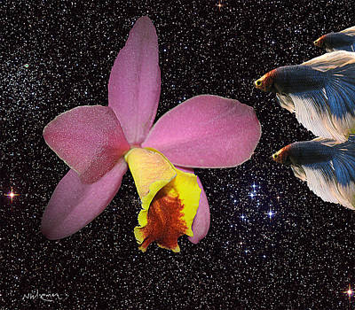 Orchid And Bettas Art Print by Neal Wiseman