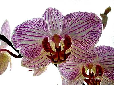 Photograph - Orchid by Barbara Moignard