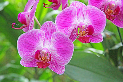 Becky Photograph - Orchid Beauty by Becky Lodes