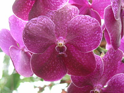 Orchid Cluster Art Print by Charles and Melisa Morrison