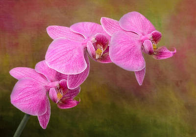 Tropical Photograph - Orchid Cluster by Susan Candelario