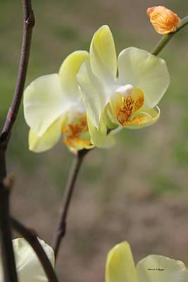 Photograph - Orchid by Deborah Hughes