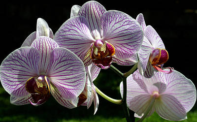 Photograph - Orchid Flower Blooms by C Ribet
