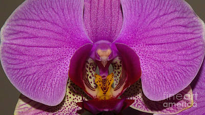 Photograph - Orchid Flower by Mareko Marciniak
