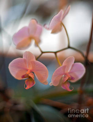 Floral Abstract Photograph - Orchid Gathering by Mike Reid