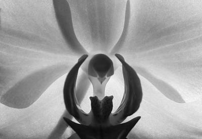 Orchid Heart Art Print by Kume Bryant