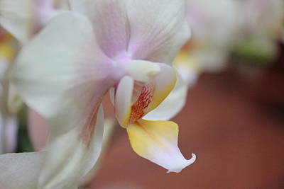 Photograph - Orchid II by Kelly Hazel